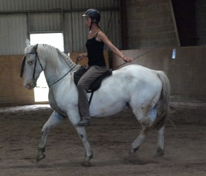 Bastian, august 2014 Man kan gøre hesten kortere bagtil uden at komprimere den fortil, men kan man kræve af en så langrygget hest med så korte ben, at den løfter sin front?